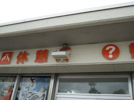 20120617_2.jpg