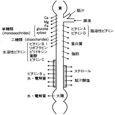 110812_小腸