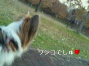 moblog_5579e36e.jpg