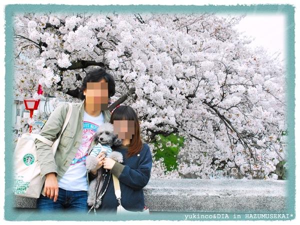 120410sakura4.jpg