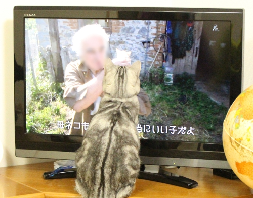 これがネコですか2