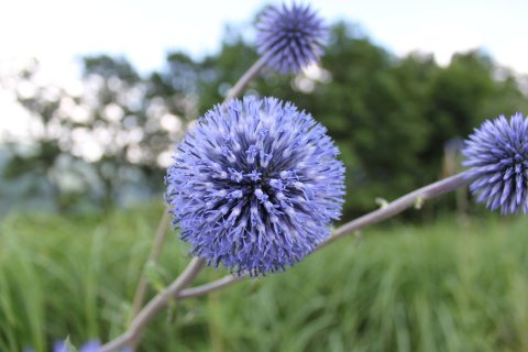 お花その4