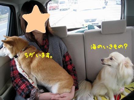 1IMG_6030.jpg