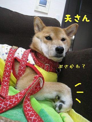 IMG_4708-2.jpg