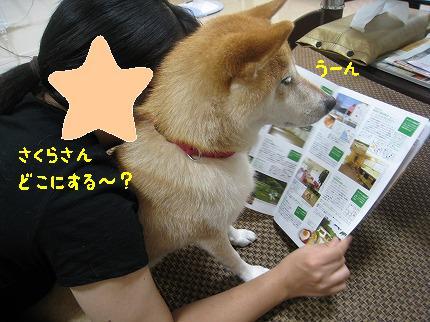 IMG_4721-2.jpg