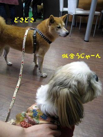 IMG_6046-2.jpg