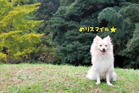 aDSC_0137.jpg