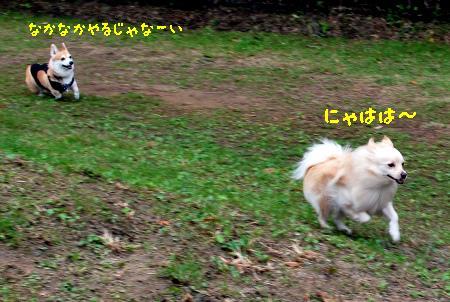 aDSC_0140.jpg