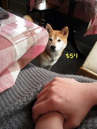 aIMG_6013.jpg