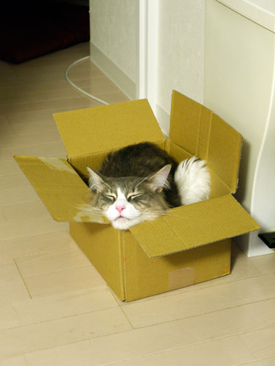 boxmaron1.jpg