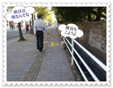 DSC01981_20131109232801bc7.jpg