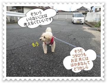 DSC01988_2013111101165830c.jpg