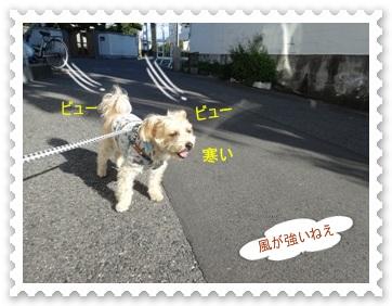 DSC02229.jpg