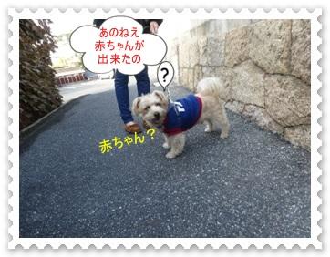 DSC02290_20131122001210e0a.jpg