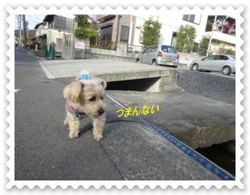 DSC02878.jpg