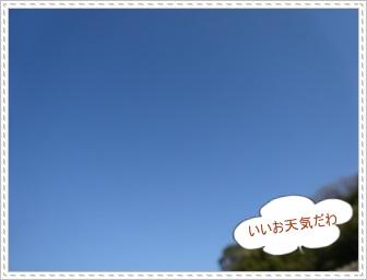 DSC03247_20131223003832b7e.jpg