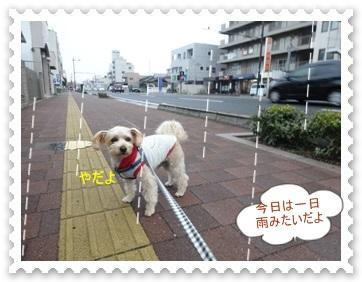 DSC03366_201312270026514f6.jpg