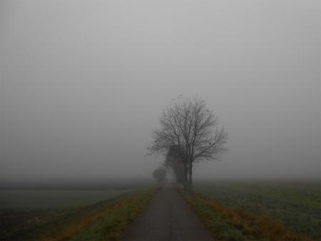 霧のボウボウ