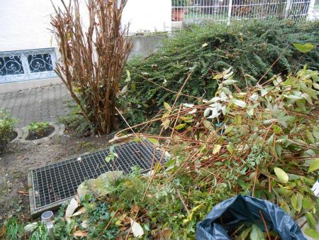冬の庭掃除1