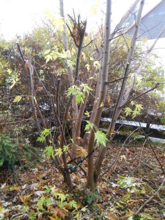冬の庭仕事2