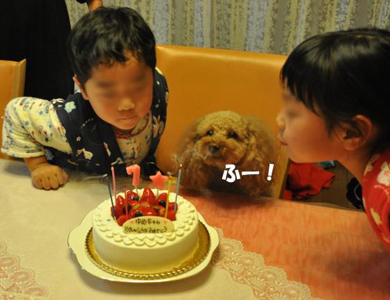 DSC_0227a_20110116224416.jpg