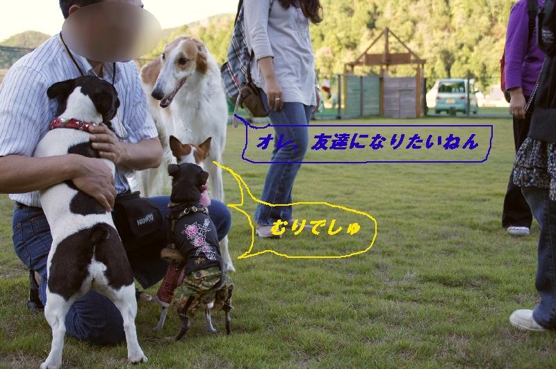 078_20101012201307.jpg