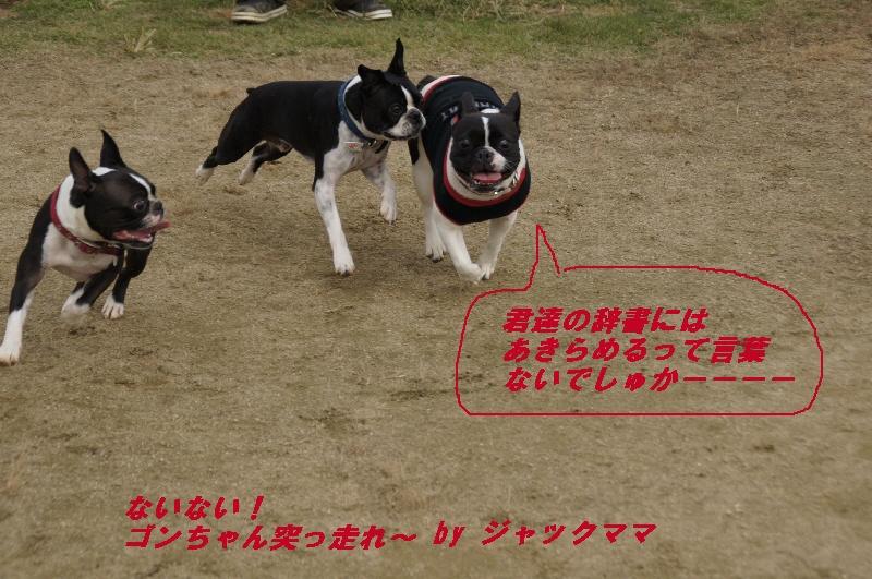 10_20101109185935.jpg