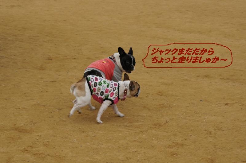 10_20101116121930.jpg