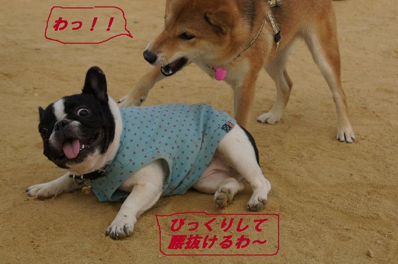 111_20101024211510.jpg