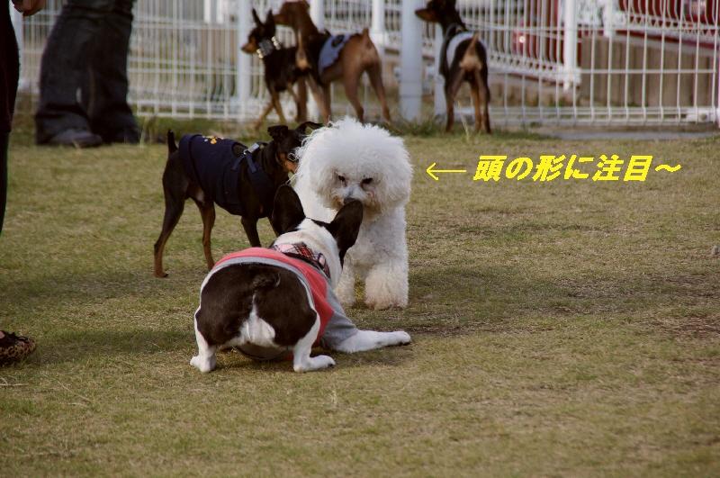 11_20101105095721.jpg