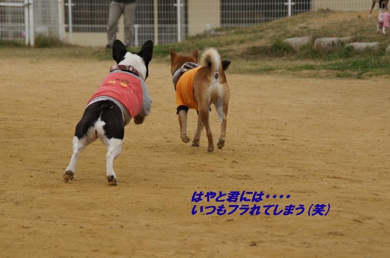 11_20101116121930.jpg