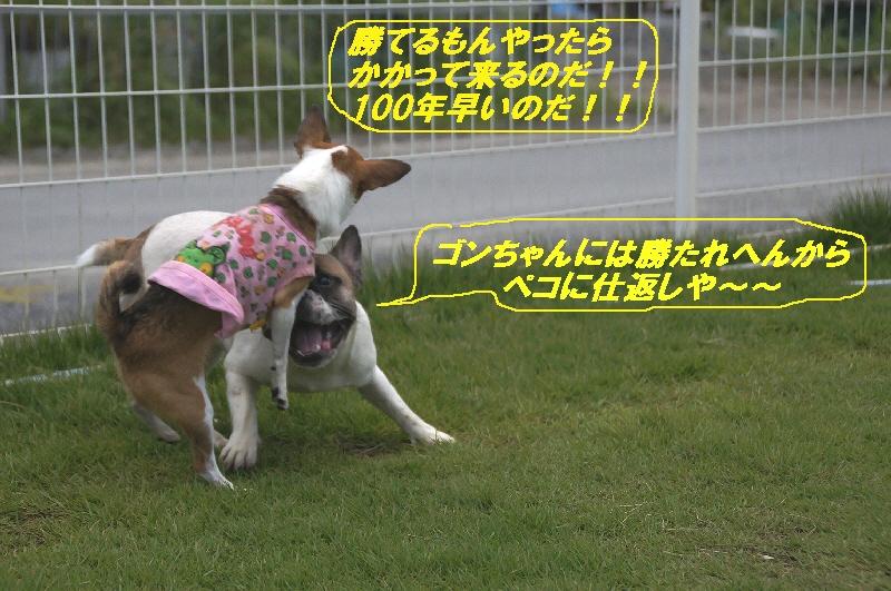 12_20100823220412.jpg