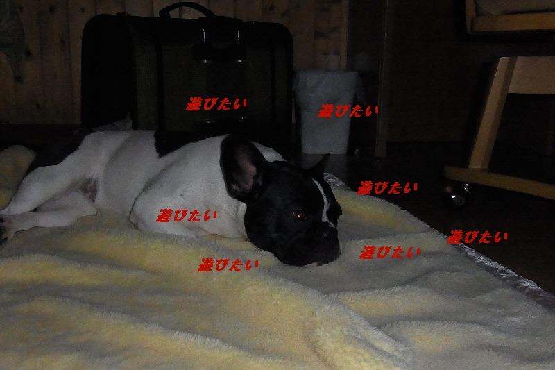 12_20100930182423.jpg