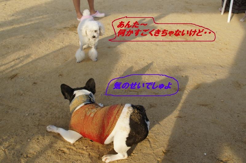 13_20100817215133.jpg