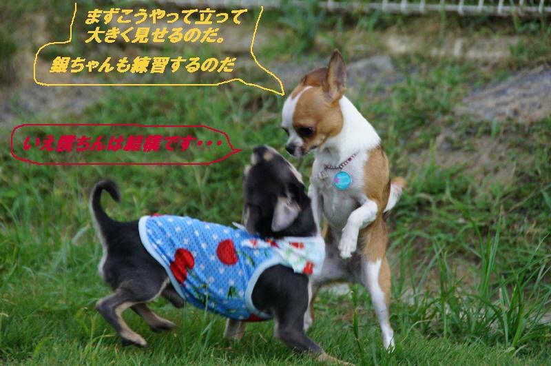 14_20100810220432.jpg