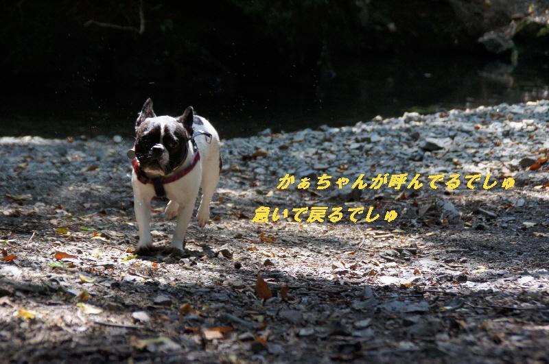 14_20100822064349.jpg