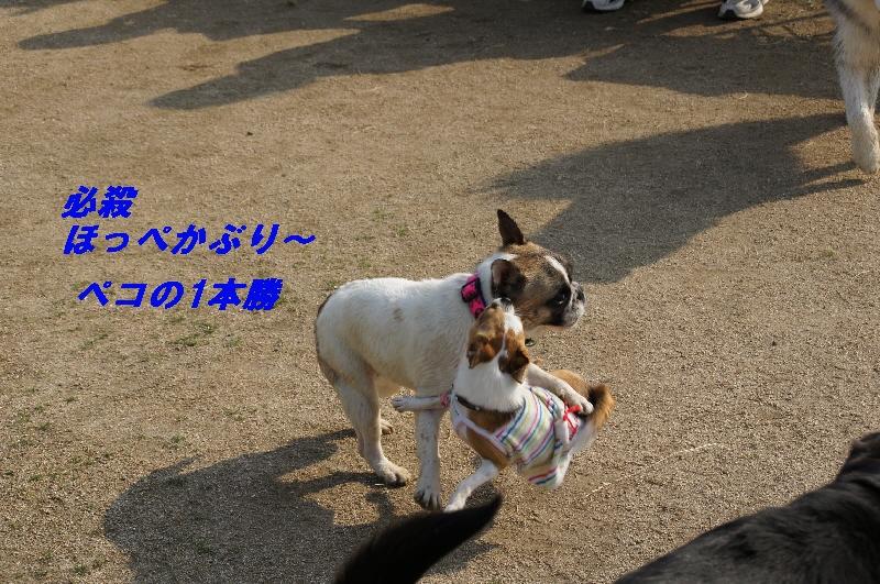 15_20100613230842.jpg