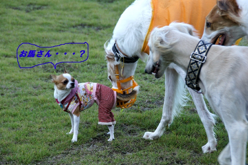 15_20101012173618.jpg