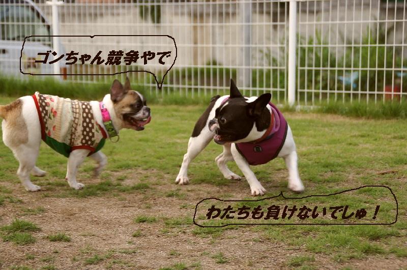 16_20100712130420.jpg