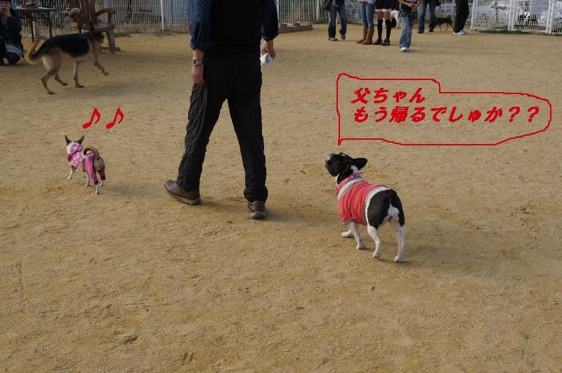 16_20101122225945.jpg