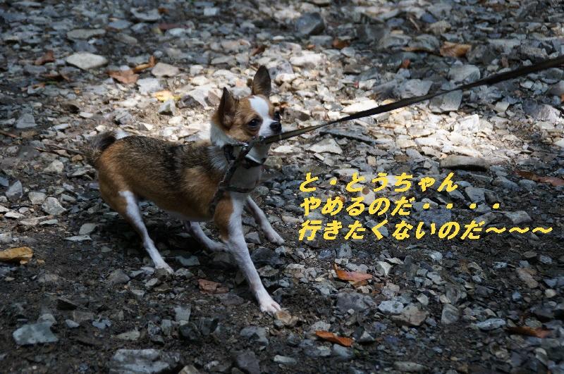17_20100822064347.jpg