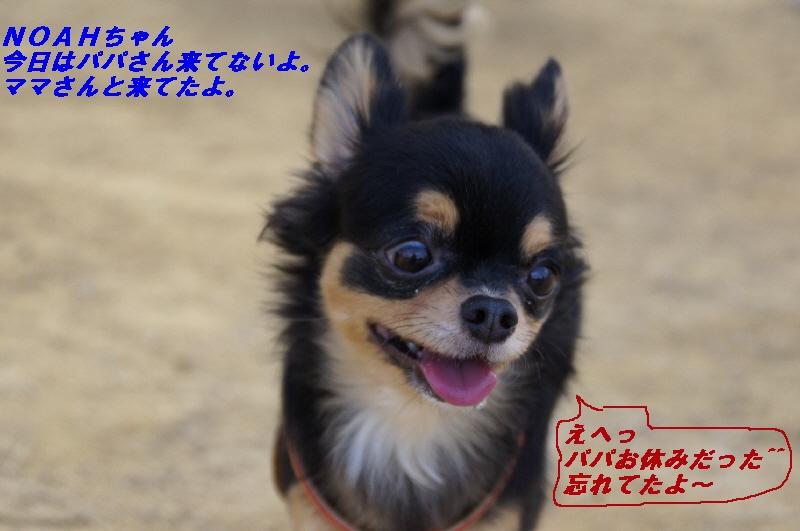 17_20101005123816.jpg