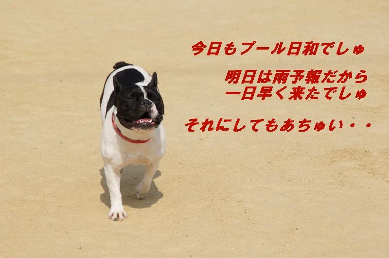 1_20100613230706.jpg