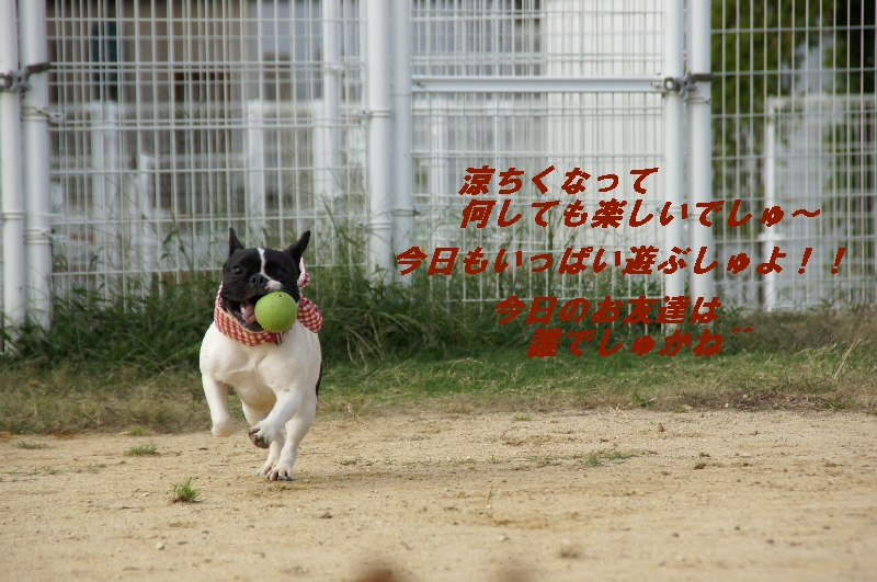 1_20101005123415.jpg