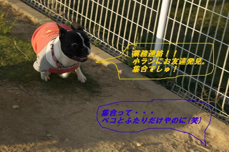 1_20101019210659.jpg