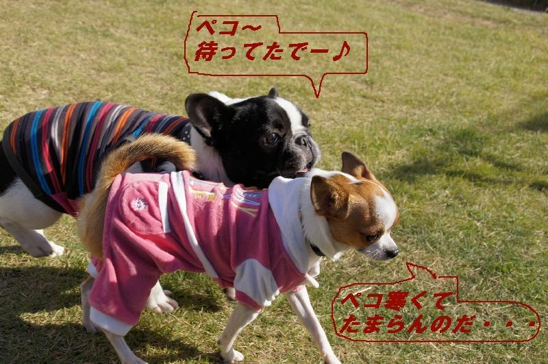 1_20101105094618.jpg