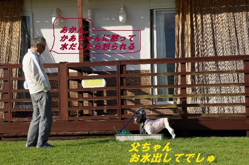 20_20100930184107.jpg
