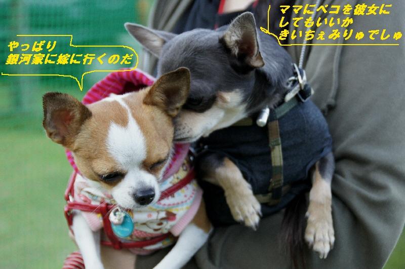 23_20101012180730.jpg
