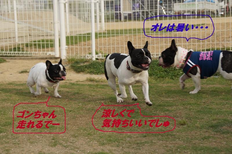 26_20100610170435.jpg