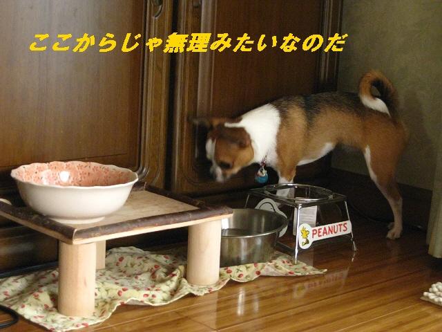 2_20100819113256.jpg
